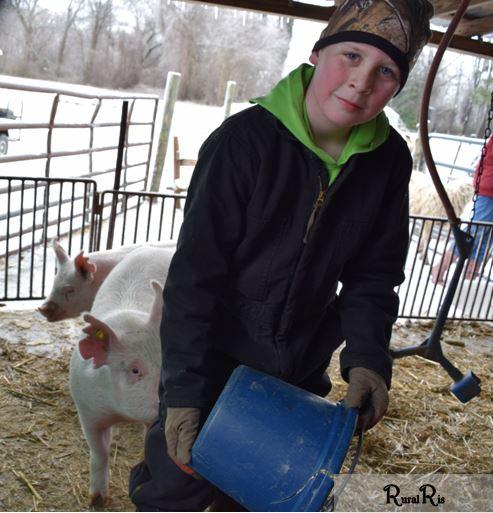 pig ice