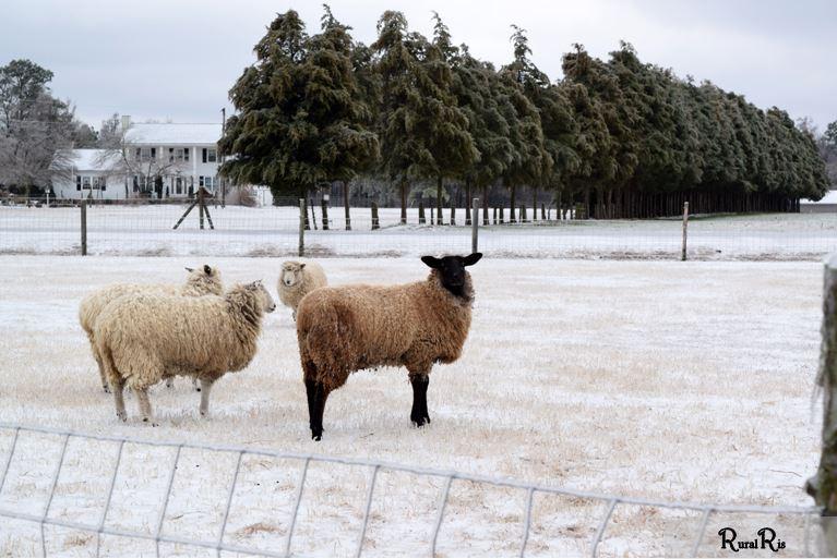 shep pasture