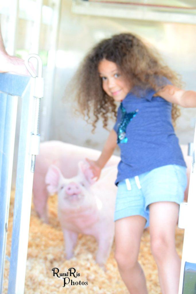 abby pig
