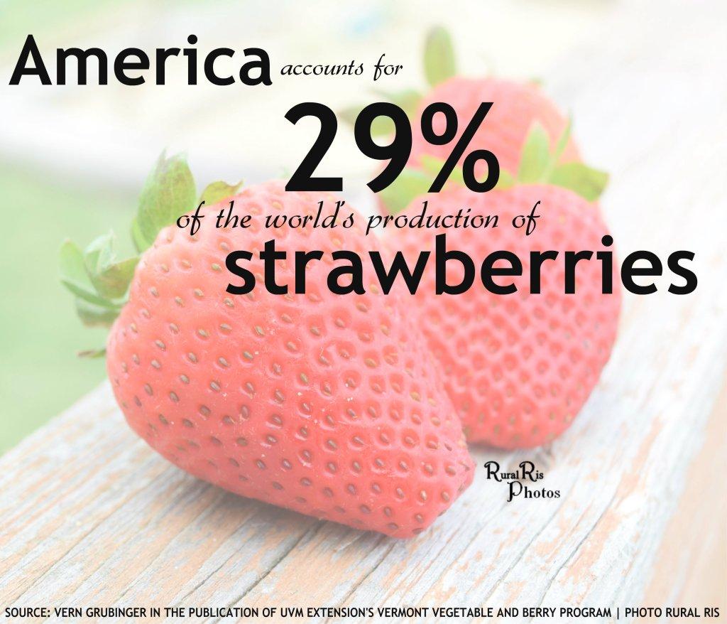 strawberry stat NEW